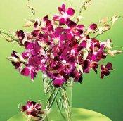 Заказ букета из орхидей для мисс изящество и совершенство